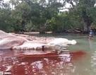 """Xác """"thủy quái"""" khổng lồ tìm thấy ở Indonesia"""