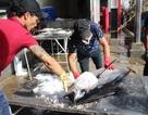 Ngư dân khốn đốn vì cá ngừ đại dương mất mùa, sản lượng thấp