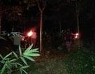 Dân đánh trống khua kẻng xua 6 con voi rừng phá hoại cây cối trong đêm