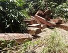 Khởi tố vụ án bắt 3 bãi gỗ trên biên giới