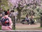 Đại sứ quán Nhật nhận hồ sơ visa qua đại lý để tạo thuận lợi cho người Việt