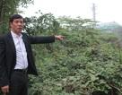 Yêu cầu Chủ tịch HĐND tỉnh Nghệ An nhanh chóng làm rõ việc thu hồi đất của dân!
