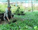 """Mượn đất dự án """"treo"""" trồng hoa, thu nhập 20 triệu đồng/tháng"""