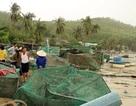 """Mất hơn 200 tỷ đồng sau bão, người nuôi tôm """"khát"""" vốn để khôi phục sản xuất"""