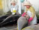 Chuỗi liên kết cá ngừ đại dương bộc lộ nhiều hạn chế