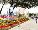 Đường phố Nha Trang rực rỡ trong dịp APEC - SOM1