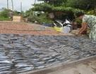 Nhiều tỉnh vẫn cấm tàu thuyền ra khơi sau bão số 16