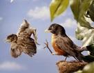 """Bảo vệ con thái quá: Bố mẹ biến con thành """"cây trồng trong nhà kính"""""""