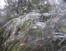 Đêm nay băng giá có thể xuất hiện trên núi cao Lào Cai