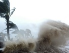 Gặp bão trên biển, ngư dân phải ứng phó thế nào?