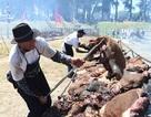 Bữa tiệc thịt nướng lớn nhất thế giới dùng hết 16.5 tấn thịt