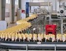 Thị trường bia nội: Bùng nổ với sản phẩm mới