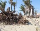 Bãi biển đẹp nhất xứ Thanh bị xâm thực nghiêm trọng