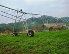 Công ty nuôi bò lớn nhất tỉnh Hà Tĩnh bất ngờ chuyển sang trồng... chuối