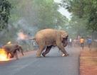 Bức ảnh khủng khiếp về xung đột giữa con người và động vật