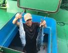 Tàu vỏ thép đầu tiên trúng lớn mẻ cá thu