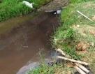 Kiểm tra doanh nghiệp chế biến lâm sản dọc sông Âm tìm nguyên nhân cá chết