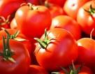 Công dụng thần kỳ của cà chua với sức khỏe cánh mày râu