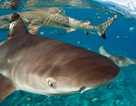 Du khách hốt hoảng khi phát hiện cá mập bơi... ngay dưới chỗ ngủ