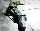 Bắt được cá sấu dài 1m trong vuông tôm