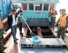 Phát hiện 6.000 con cá song nhập lậu từ Trung Quốc