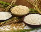 Cám gạo - Phần quý giá của hạt gạo đang bị bỏ phí