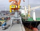 Hải Phòng giao quận cưỡng chế doanh nghiệp không nộp phí hạ tầng cảng biển