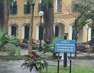Rà soát cây xanh trường học sau vụ nữ sinh THPT Chu Văn An bị cây đổ làm gãy chân tay