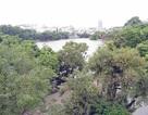 Chủ tịch Hà Nội khẳng định không thay thế cây xanh quanh Hồ Gươm