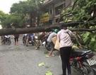 Gió lốc quật ngã nhiều cây xanh, làm tốc mái gần 800 nhà dân Lào Cai