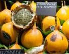 Chanh dây Colombia siêu đắt: Việt Nam cũng làm được