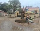 Hà Nội: Cây xanh bị chặt hạ nằm ngoài phạm vi đường bê tông 3m