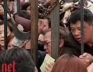 Lễ hội hoa hồng lộn xộn, người dân đòi trả vé: BTC lên tiếng xin lỗi