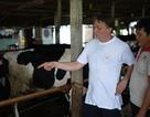 Hà Lan giúp nâng cao năng lực cho nông dân nuôi bò tại Việt Nam