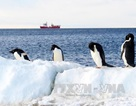 Phát hiện mới về sự tồn tại của chim cánh cụt ở Nam Cực