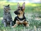 Chó và mèo loài nào thông minh hơn?