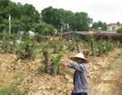 Tái lấn chiếm để trồng cây, đòi hỗ trợ tổng trị giá 19 tỉ đồng!