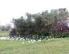 Cận cảnh những lùm cây, góc ruộng chim trời sa vào... chỉ có chết!
