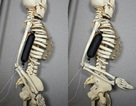Tạo ra các cơ bắp giả mạnh gấp 15 lần so với mô của người
