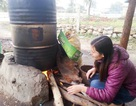 Cô giáo trường làng tâm huyết với dạy học và nghề dầu tràm truyền thống