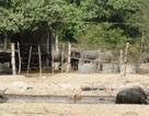 TPHCM: Cho phép công viên Safari mở nhà hàng, khách sạn