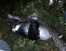 Dân làng hoảng sợ khi phát hiện xác người trong bụng trăn khổng lồ