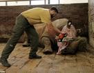 Du khách bàng hoàng trước khoảnh khắc nhân viên vườn thú cưa sừng tê giác