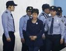 """Bà Park """"căng thẳng thể chất"""" tột độ vì bị xét xử 4 lần/tuần"""