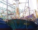 Công ty đóng tàu đổ lỗi do ngư dân bảo dưỡng không phù hợp