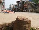 Hà Nội: Không tự ý chặt hạ cây xanh khi giải phóng vỉa hè