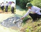 Hồ chứa 13 triệu m3 nước ô nhiễm: Đình chỉ ngay trang trại xả thải