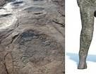 Tiết lộ về loài khủng long sở hữu dấu chân dài nhất thế giới
