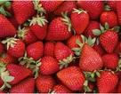 Phát hiện hợp chất tự nhiên trong quả dâu tây có thể phòng ngừa bệnh Alzheimer