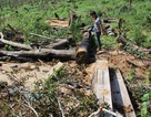 """Để rừng bị """"cạo trọc"""", lãnh đạo công ty lâm nghiệp bị bắt"""
